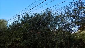 Пучки в деревья, Балашиха