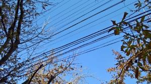 Кабельная гитара в деревьях. Симферополь