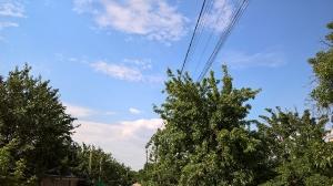 Пучок тонких кабелей в деревья. Таганрог